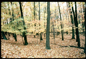 Image of deer browse line at Catoctin Mountain Park