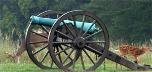 Battlefield cannon with deer at park