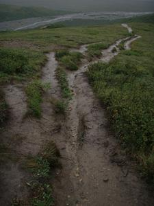 Image of Gorge Creek Trail, ruts and trail braiding.