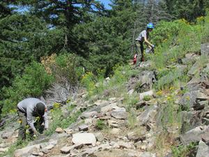 Crater Lake employees addressing an invasive plant population