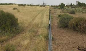 New fence along the park boundary showing the difference in vegetation due to livestock grazing.