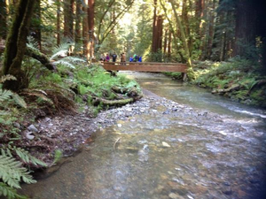 Long view of Redwood Creek with pedestrian bridge in the distance.
