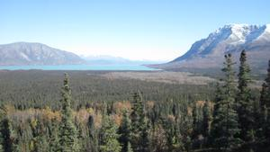 View from the proposed platform location at the Research Bay overlook in Katmai National Park and Preserve. In the foreground an extensive stand of spruce forest is visible, with the Iliuk Arm of Naknek Lake visible in the background.