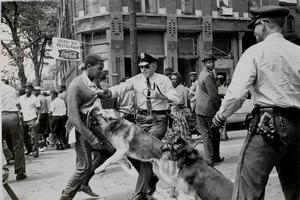 Photo from Birmingham Campaign, Police Dog Attacking Youth, 1963, Bill Hudson