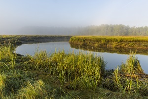 Photo of the York River with mist rising over saltmarsh. Credit: Jerry Monkman